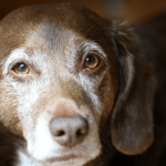 Why you should consider adopting an older pet